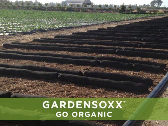 Commercial Organic Farm